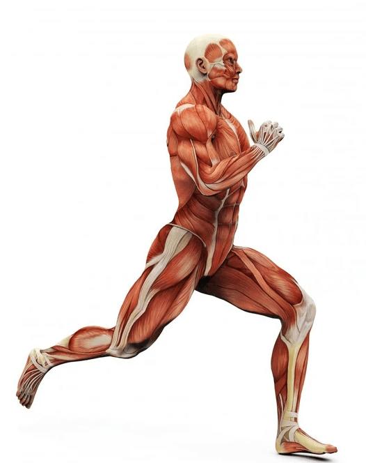 human running, running exercises, exercises for runners